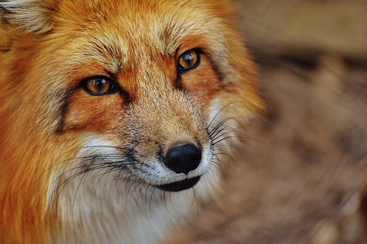 Werbetexter Berlin textet Radiospot für einen Tierpark